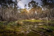 30th Oct 2020 - wetland