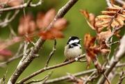 30th Oct 2020 - Feed the Birds