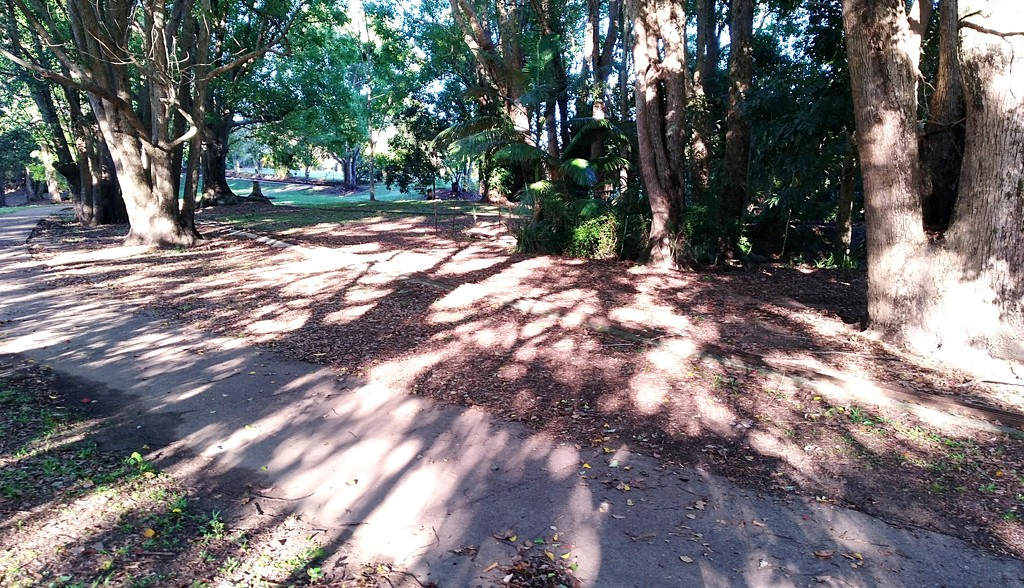 Early morning shadows, on my morning walk by 777margo