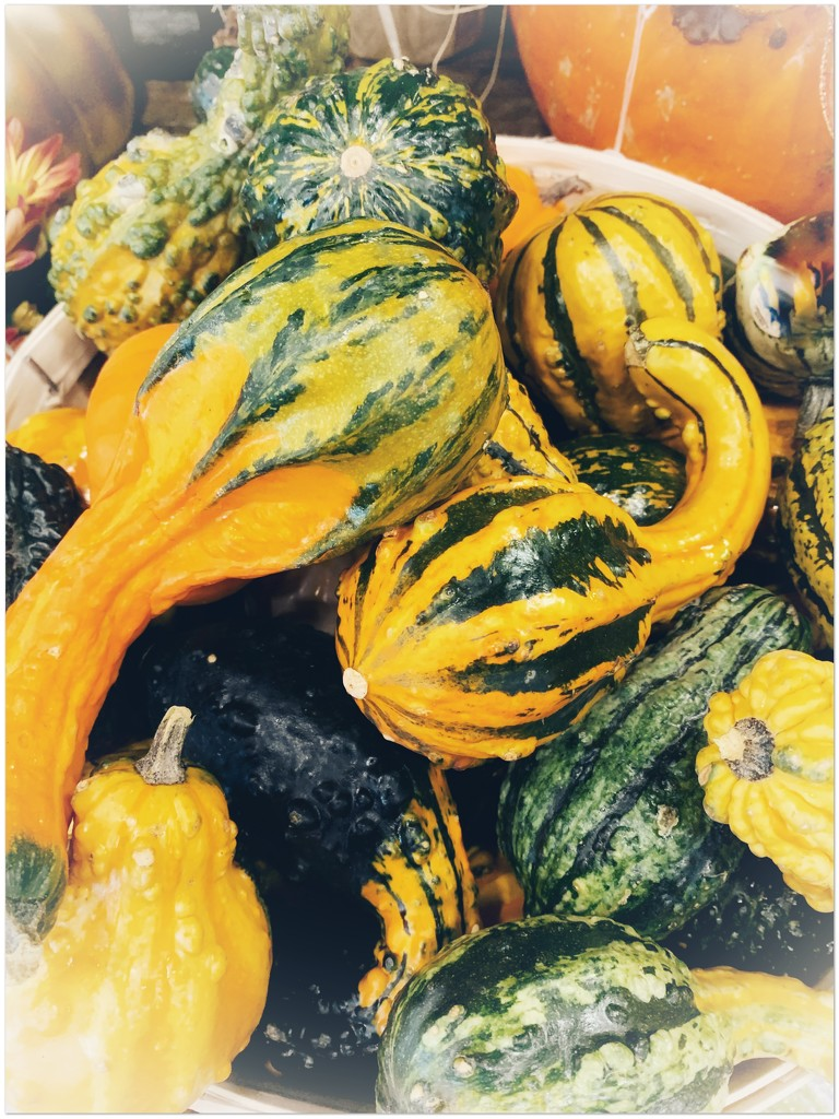 Gourds and pumpkins at my grocery store by louannwarren