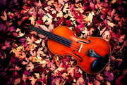 29th Oct 2020 - The Music of Leaves