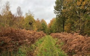 30th Oct 2020 - A New Walk On My Patch