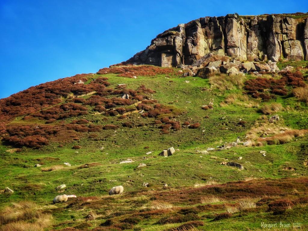 Hillside by craftymeg