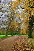 30th Oct 2020 - Autumn Avenue
