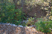 30th Oct 2020 - A tuch of snow on al fall afternoon
