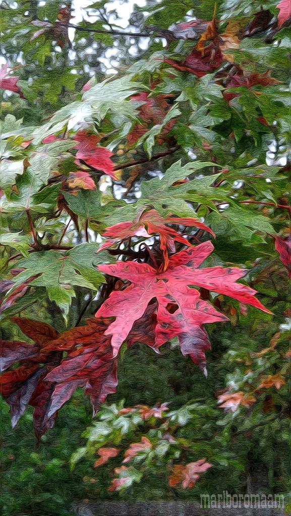 Painted maple leaves... by marlboromaam