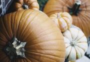 30th Oct 2020 - 018 - Pumpkins