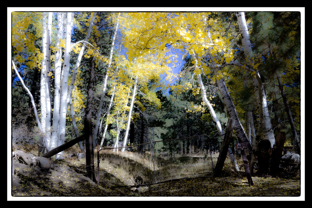 Gate with Aspens by joysabin