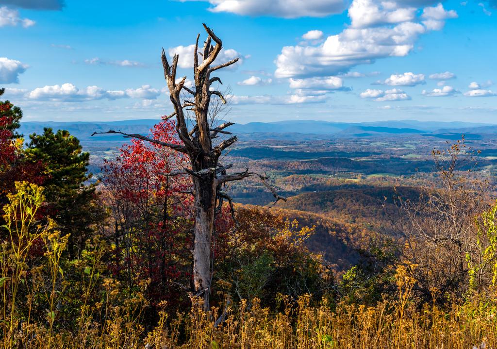 fall colors mountain- by myhrhelper