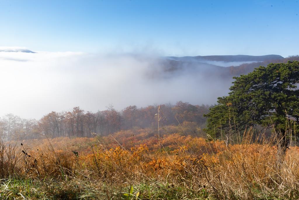 in a fogDSC_0018 by myhrhelper