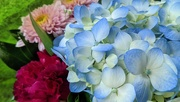 30th Oct 2020 - Bouquet
