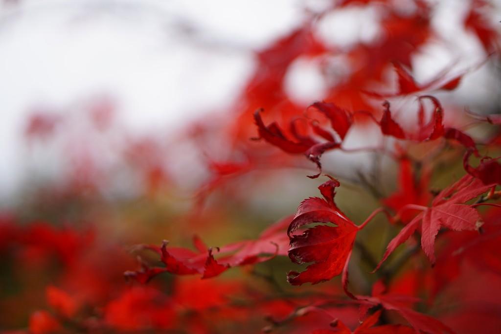 last leaves  by quietpurplehaze