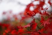 31st Oct 2020 - last leaves