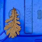 30th Oct 2020 - Autumn blues