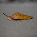Just a leaf on the beach by gosia