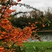 Autumn berries at the boating lake
