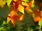 31st Oct 2020 - Fall's Colors