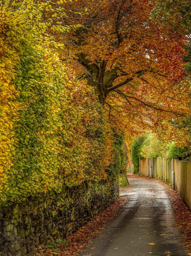 Autumn  by shepherdmanswife