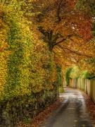 31st Oct 2020 - Autumn