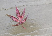 28th Oct 2020 - Just a leaf on the patio