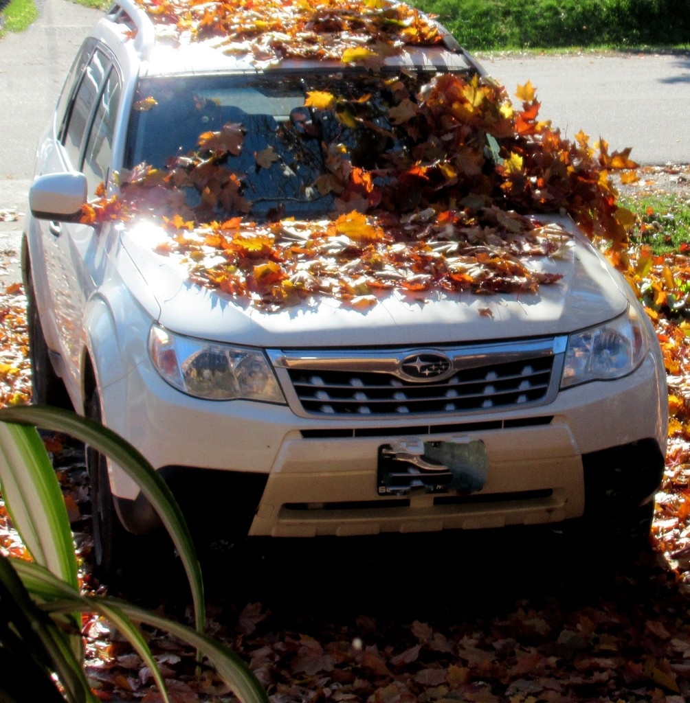 The fallen leaves are sliding of the car. by bruni