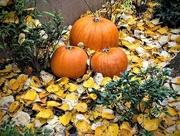 31st Oct 2020 - Happy Halloween!