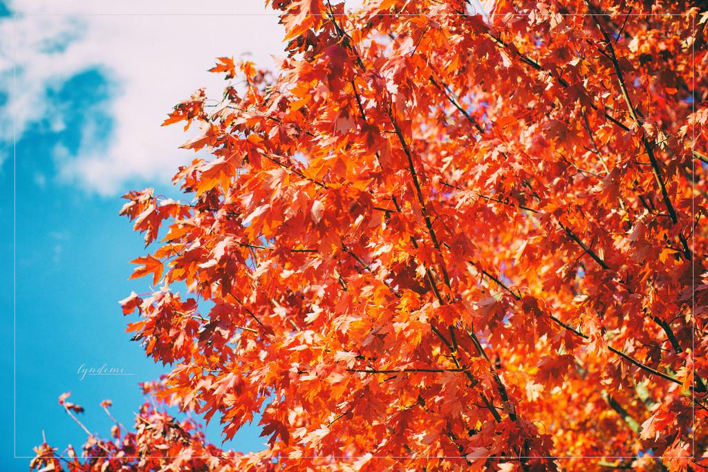 Sweet October by lyndemc