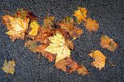 31st Oct 2020 - Lockdown Leaves