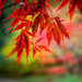 acer bright by pistache