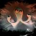 Kooky Octopus Edit 5