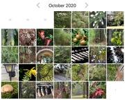 1st Nov 2020 - October - Paintings