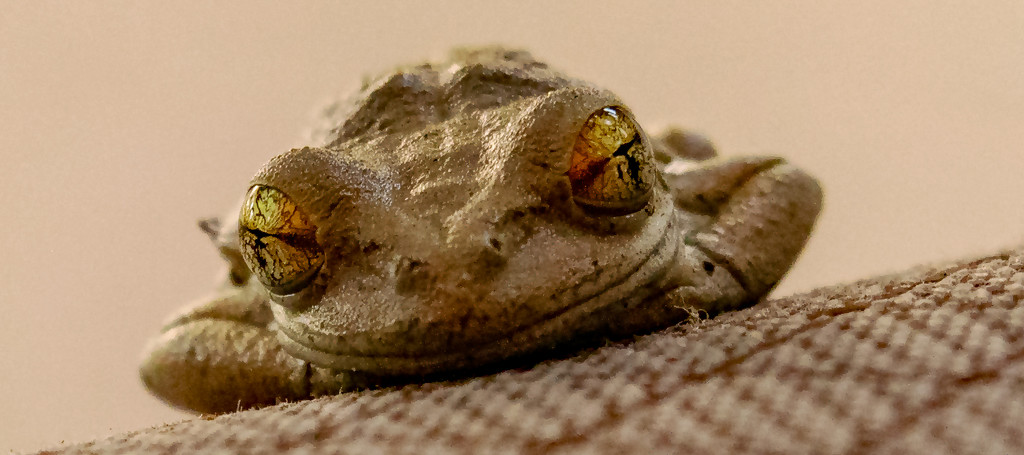 Frog On the Chair! by rickster549