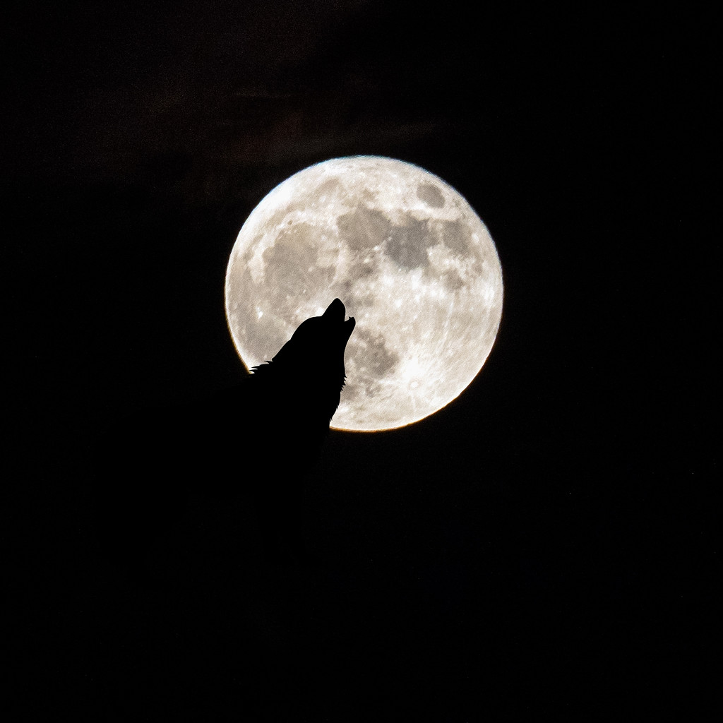 Bark at the Moon by rosiekerr