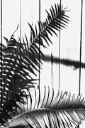 26th Oct 2020 - Get Pushed 431 - cycad shadows