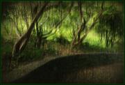 31st Oct 2020 - The path