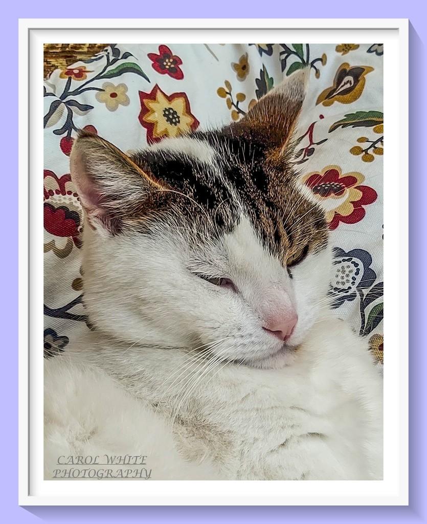 Sleepy Head by carolmw