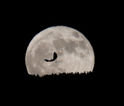 1st Nov 2020 - Moonrise on Halloween Night