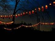 30th Oct 2020 - Lanterns of Light