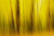 20th Oct 2020 - Autumn Blur
