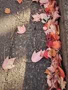 31st Oct 2020 - Fall Leaves on the ground