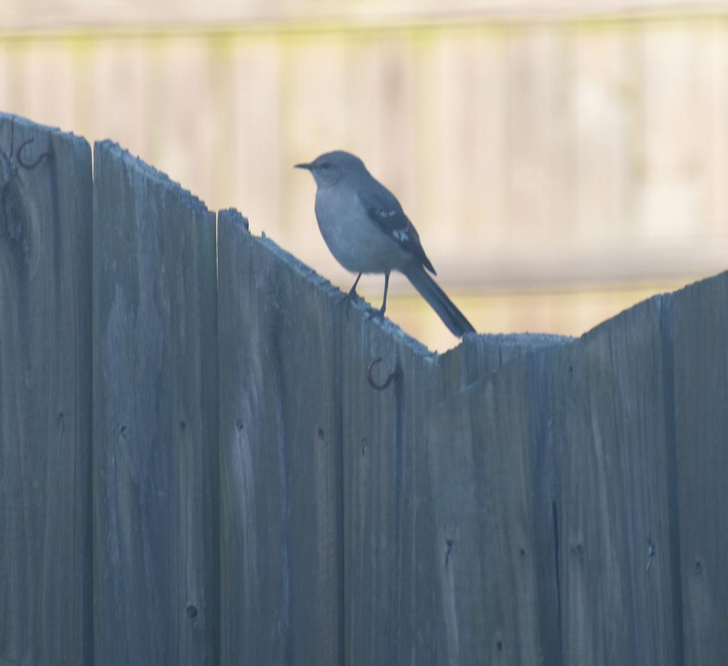 Mockingbird by homeschoolmom