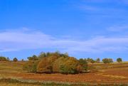 1st Nov 2020 - Bradgate Landscape