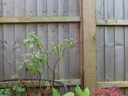 1st Nov 2020 - The last Fuchsia