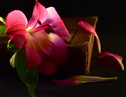 1st Nov 2020 - Flower and Book
