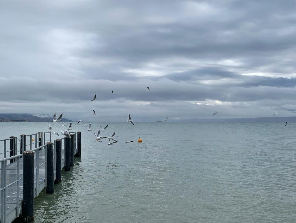 Seagulls.  by cocobella