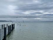 2nd Nov 2020 - Seagulls.