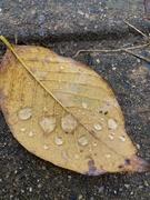 1st Nov 2020 - Rainy Day