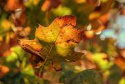 30th Oct 2020 - Fall Flurry