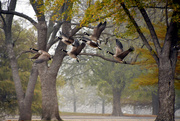 23rd Oct 2020 - Forest Flight