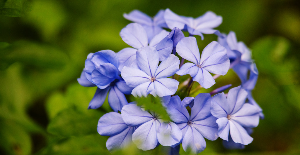 Blue Flowers! by rickster549